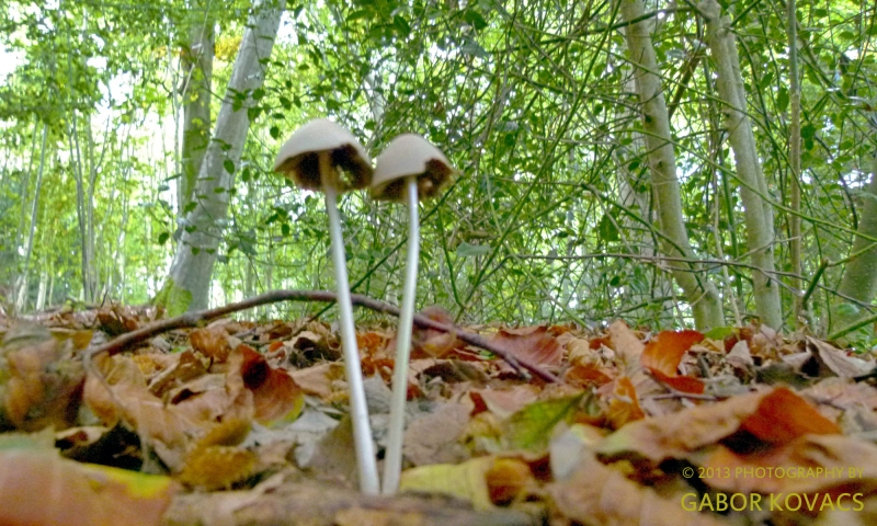 toadstools © 2013 GABOR KOVACS