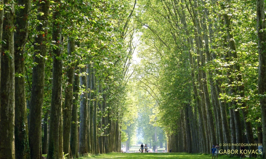versailles avenue of trees (c) Gabor Kovacs 2013