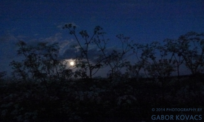 cow parsley by moonlight © 2014 PHOTOGRAPHY BY GABOR KOVACS
