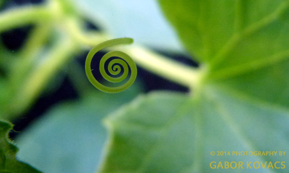 tendril © 2014 PHOTOGRAPHY BY GABOR KOVACS
