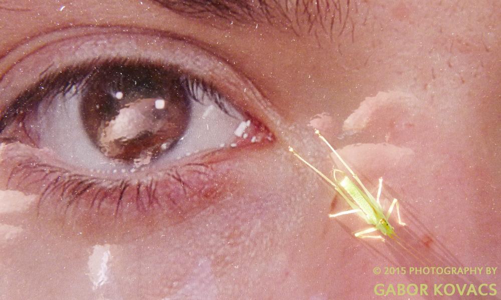 grasshopper © 2015 PHOTOGRAPHY BY GABOR KOVACS