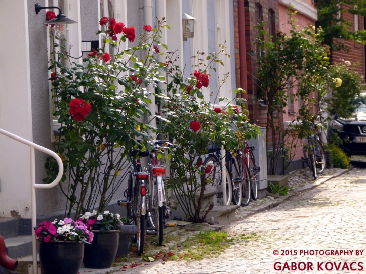 roses and bicycles © 2015 PHOTOGRAPHY BY GABOR KOVACS